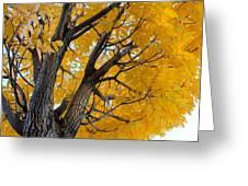Moab Color Splash Greeting Card