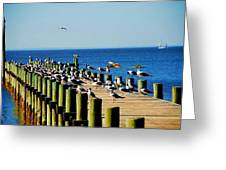 Mobile Bay Meeting Of The Minds Greeting Card