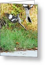 Mockingbird Fight Club Greeting Card