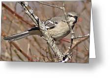 Mockingbird II Greeting Card