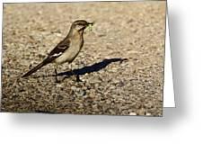 Mockingbird Meal Greeting Card