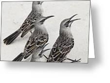 Mockingbirds Mimidae Galapagos, Equador Greeting Card