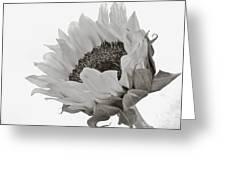 Model Greeting Card