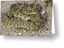 Mohave Diamondback Rattlesnake Coiled Greeting Card
