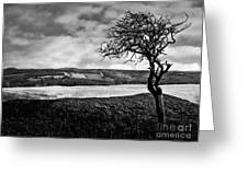 Moisonnerie Bw Greeting Card
