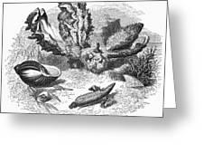 Mollusk Greeting Card