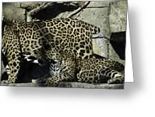Mom And Baby Cheetah Greeting Card