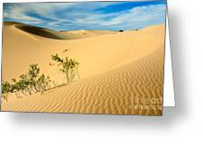 Monahands Sandhills State Park Texas Greeting Card