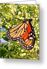 Monarch An Wildflowers Greeting Card