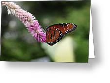 Monarch And Lavender Greeting Card