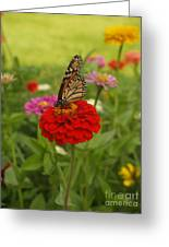 Monarch And Red Zinnia 2009 Greeting Card