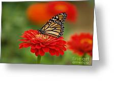 Monarch And Red Zinnia Greeting Card