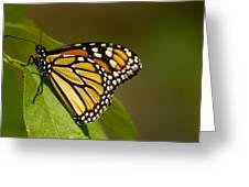 Monarch Beauty Greeting Card by Dean Bennett