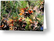 Monarch Butterfly Gathering Greeting Card