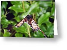Monarch Butterfly In Flight Greeting Card