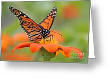 Monarch Butterfly Macro Greeting Card