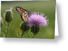 Monarch Butterfly On Bull Thistle Wildflowers Greeting Card