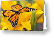 Monarch Butterfly On Flower Greeting Card