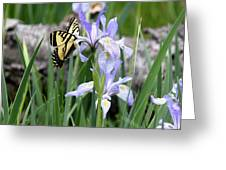 Butterfly On Iris Greeting Card