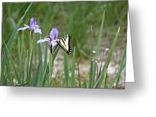 Monarch Butterfly On Iris Ser2 Greeting Card