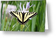 Butterfly On Iris Ser3 Greeting Card