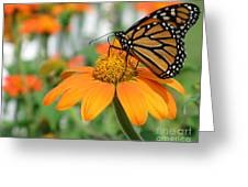 Monarch Butterfly On Tithonia Flower Greeting Card