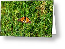Monarch Butterfly Photograph Greeting Card