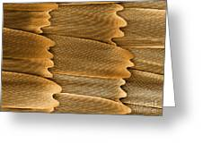 Monarch Butterfly Scales, Sem Greeting Card