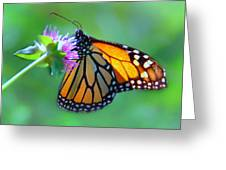 Monarch Glow Greeting Card