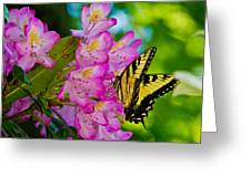 Monarch Of Blowing Rock Greeting Card