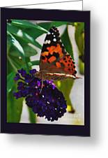Monarch On A Black Knight Butterfly Flower Greeting Card