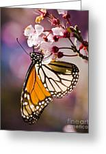 Monarch On A Flower Greeting Card