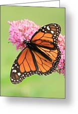 Monarch On Blossoms Greeting Card