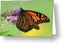 Monarch On Green Greeting Card