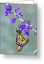 Monarch On Purple Greeting Card