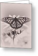 Monarch On Sunflower Greeting Card