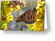Monarch On The Dunes  Greeting Card