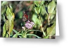Monarch On The Wild Flowers Greeting Card