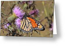 Monarch On Thistle II Greeting Card