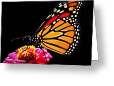 Monarch On Zinnia Greeting Card