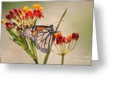 Monarch Portrait Greeting Card