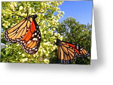 Monarch Rest I Greeting Card