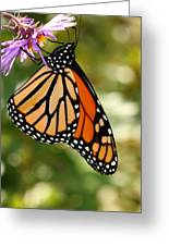 Monarch Rest Greeting Card