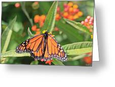 Monarch Sipping Greeting Card