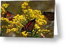 Monarchs On Yellow Greeting Card