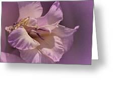 Monday's Gladiola No. 6 Greeting Card