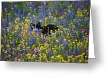 Monet's Cat Greeting Card