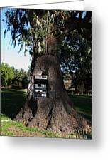 Money Tree . 7d9817 Greeting Card