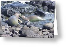 Monk Seals Greeting Card