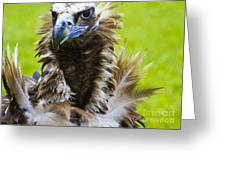 Monk Vulture 5 Greeting Card